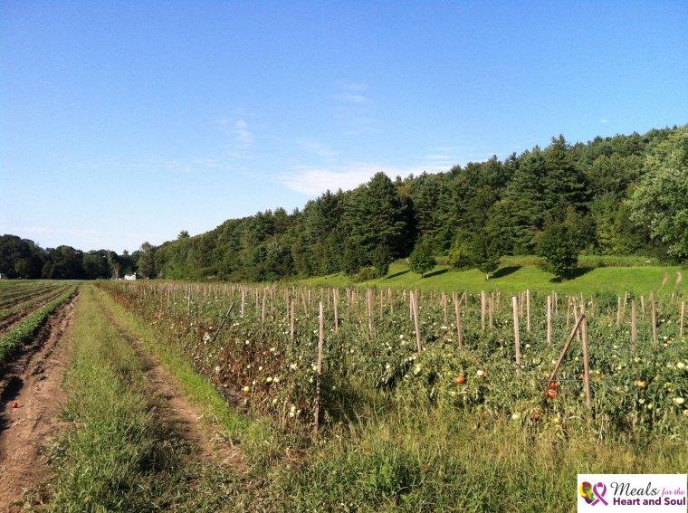 Pick Up: Red Fire Farm – Montague, MA | Ellen's Heart and Soul - photo #41